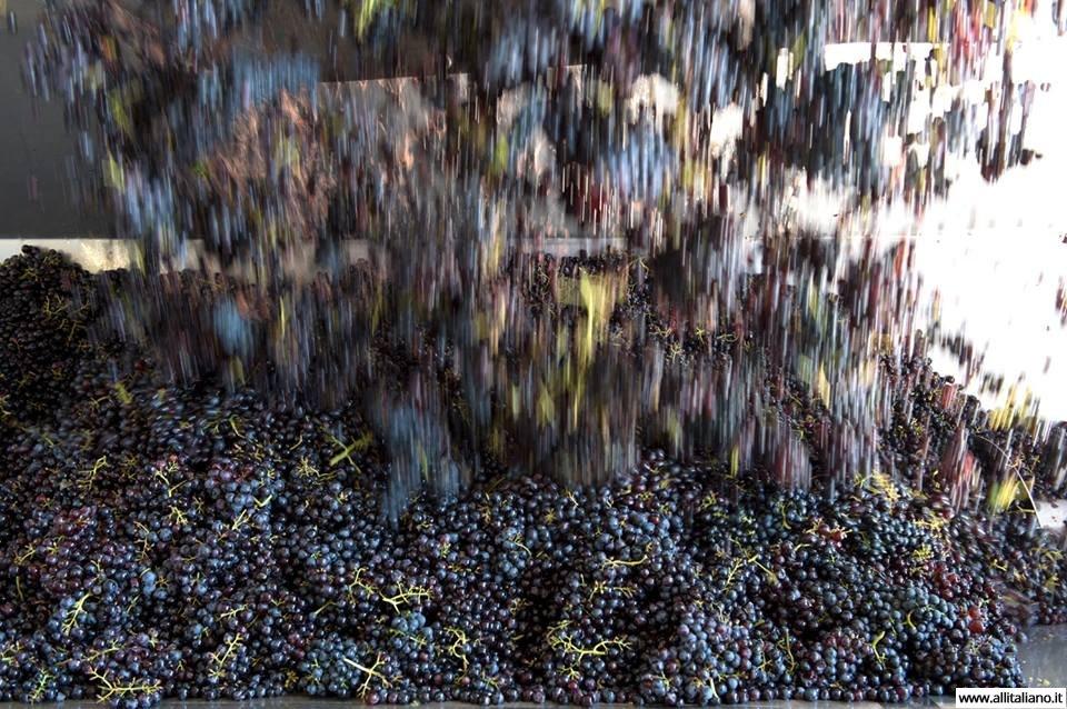 italia-konobella-vinnoeproizvodstvo-allitaliano
