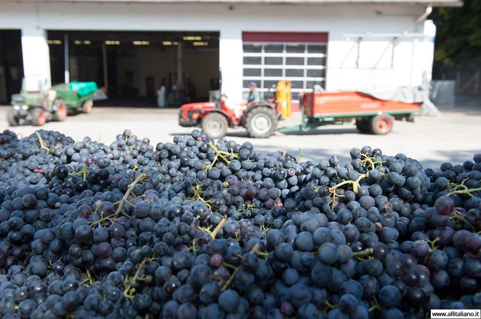 italia-konobella-vinnoeproizvodstvo-vino