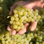italia-konobella-vino-vinnoeproizvodstvo