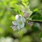 По цветущим садам Южного Тироля на велосипеде