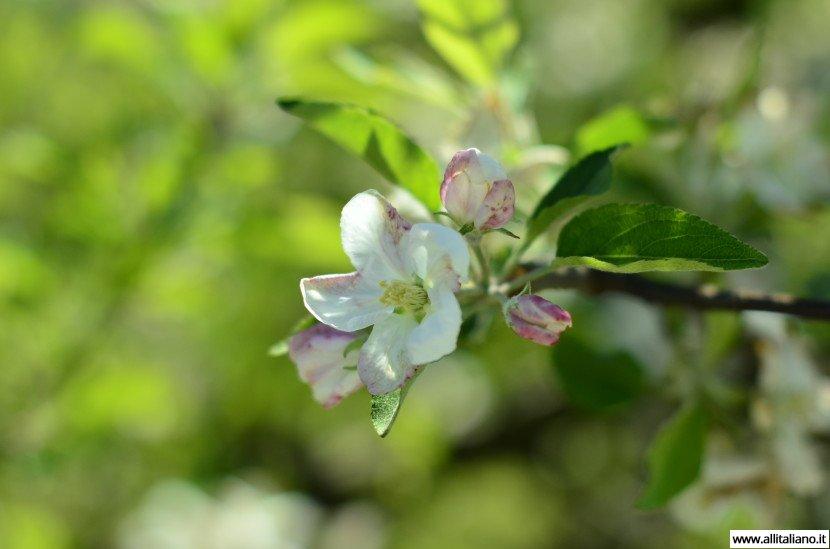 Южный Тироль: велотур по цветущим садам