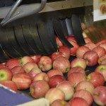 Производство яблок в Южном Тироле