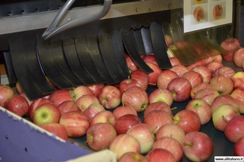 Южный Тироль: райские яблочки