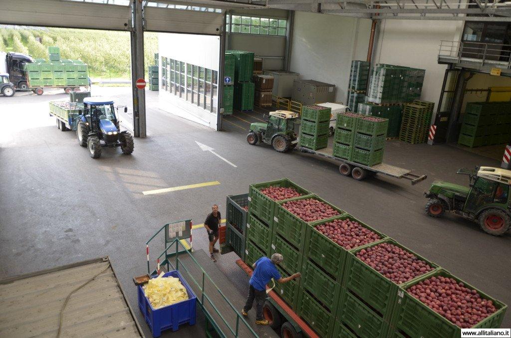 Крестьяне привозят свой урожай на производство EOFruit
