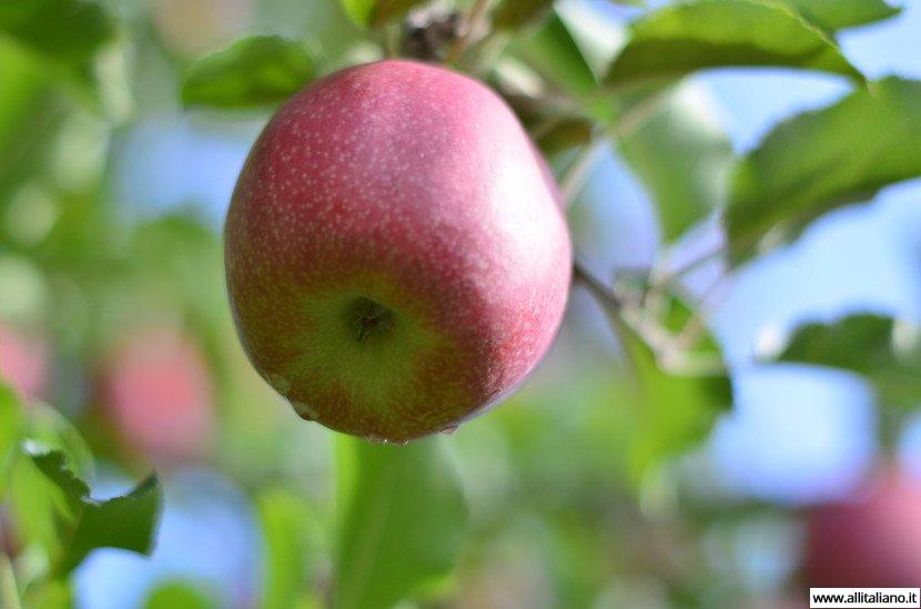 Южный Тироль: яблочная стихия…