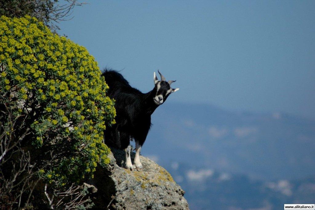 italia-svetlana-konobella-neapol-campagna-neapol-koza